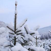 暮春的长白山下了一场大雪 春天不会因突如其来来的雪而羁绊脚步
