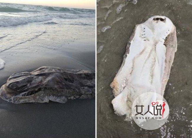 澳洲海滩现不明生物十分诡异 网友:吓死宝宝了