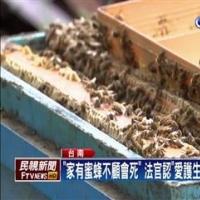 纵放? 要顾蜜蜂不然会死 通缉犯交保!